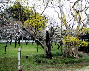 弘道館_庭園1