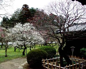 弘道館_庭園3