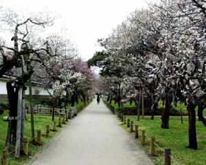 弘道館公園1