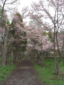 CIMG5470苗穂自然公園