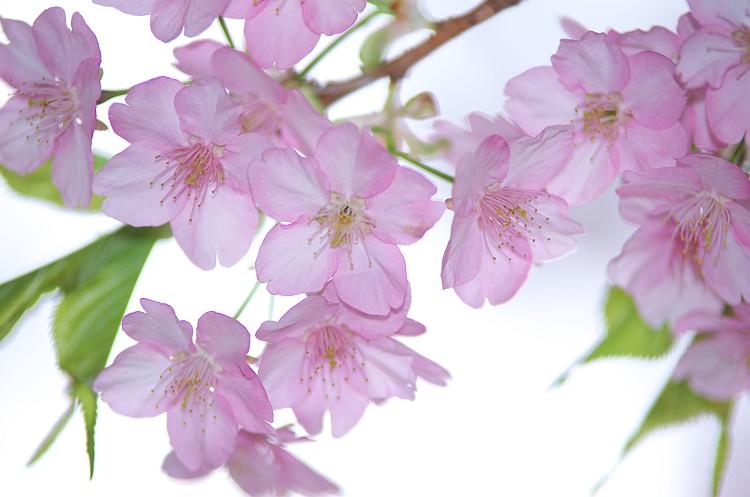 花になろう! 2