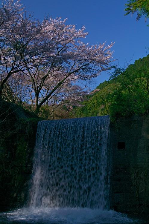 桜咲く季節はもうすぐ
