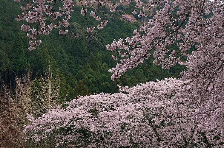 望郷の春 3