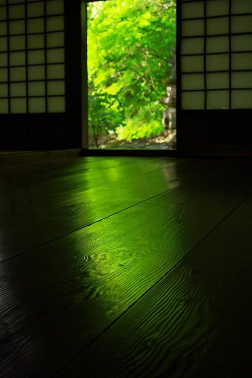新緑 ~加茂花菖蒲園 2~