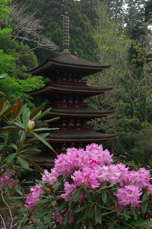 石楠花が咲く室生寺 其の弐