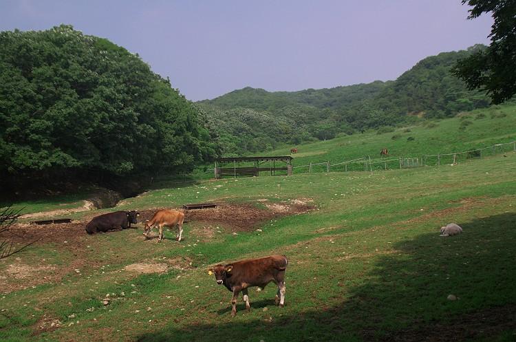 草原と動物たち 1