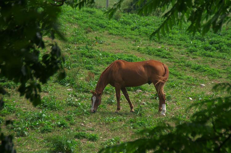 草原と動物たち 2