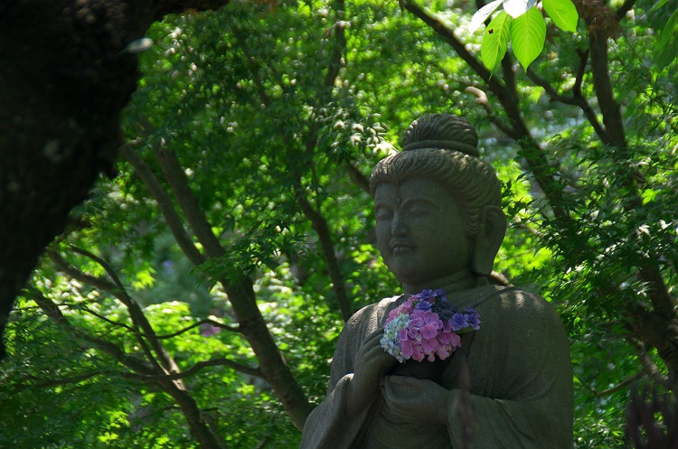 紫陽花のうた 4