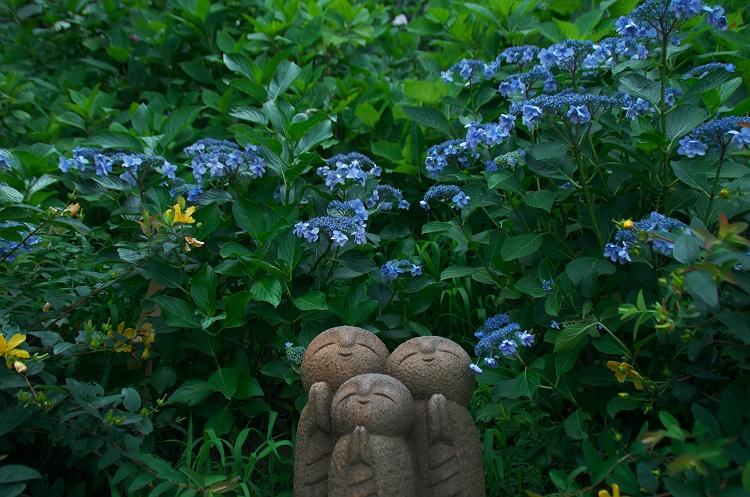 紫陽花のうた 6