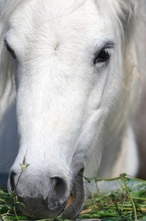 シオーネの馬
