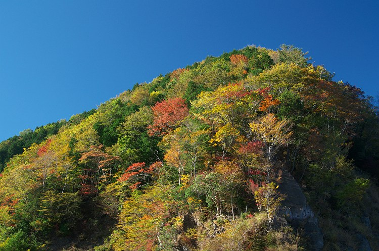 大札山、山犬段の紅葉 3