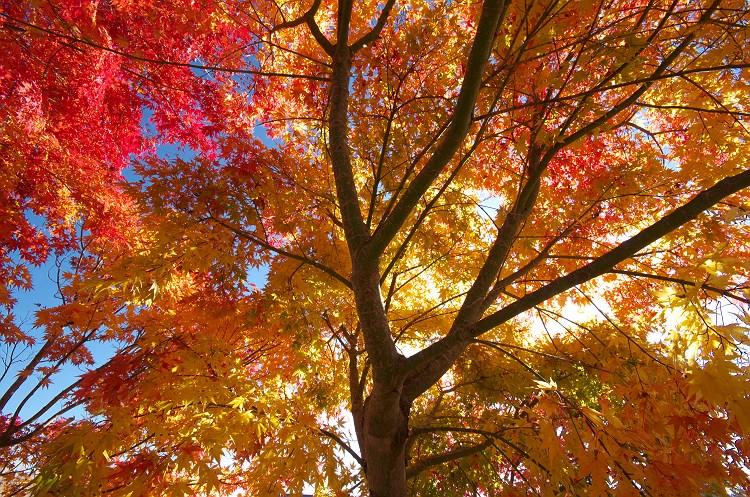 秋色に燃えて 2