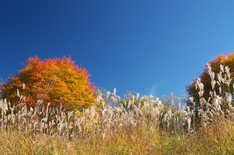 秋色に燃えて 5