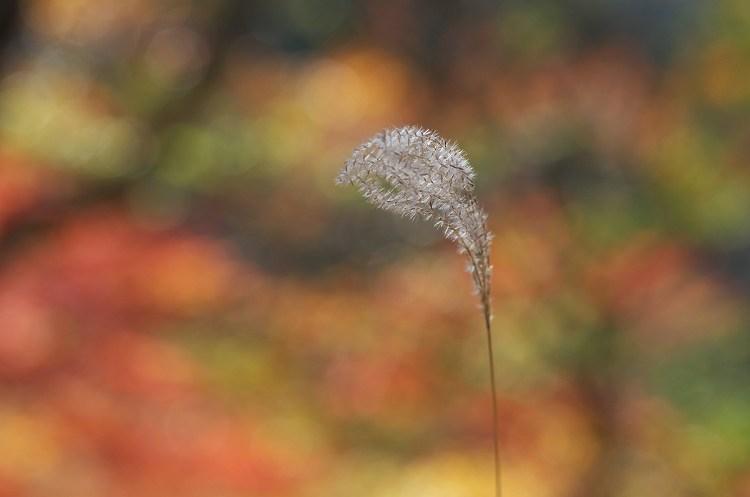 秋色に燃えて 7