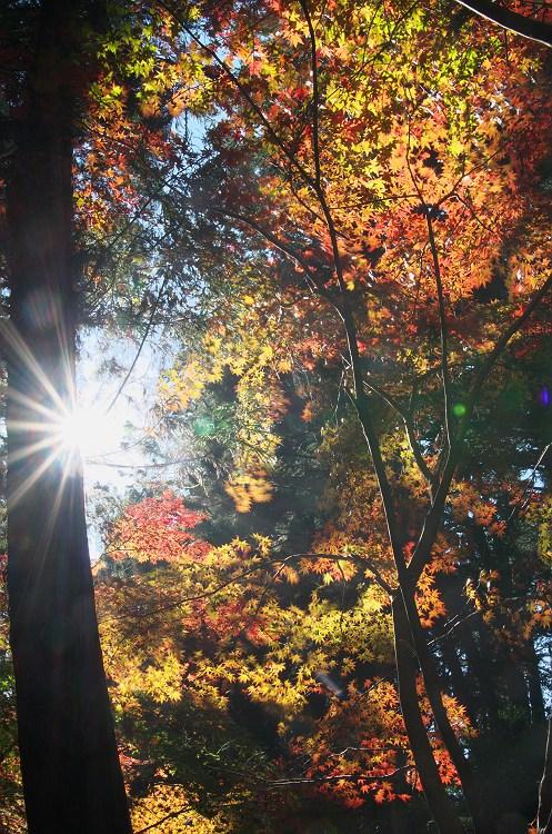 彩りの秋がやってくる ~小国神社の紅葉 2~