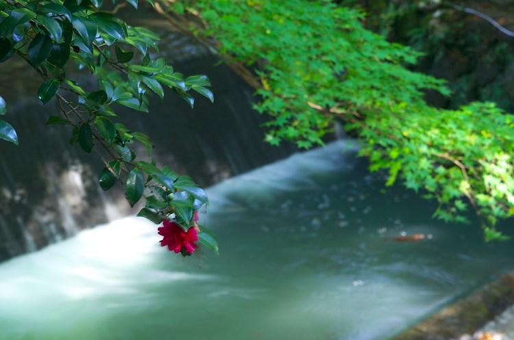 秋の光と… ~小国神社の紅葉 5~