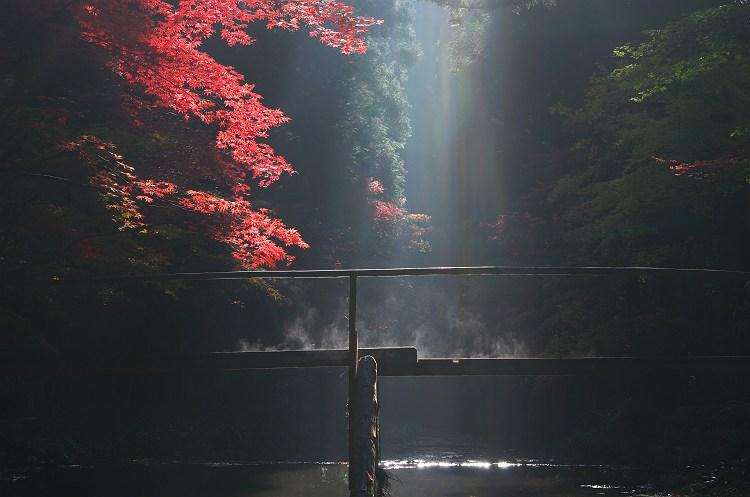 スポットライトの中で… ~小国神社の紅葉 10~