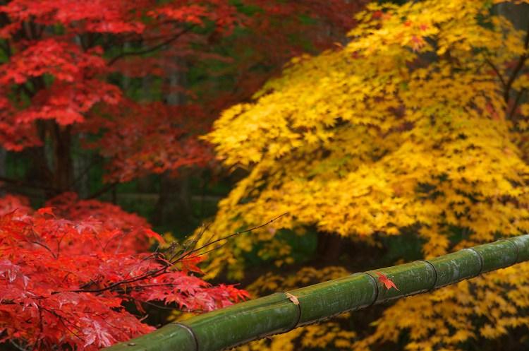 小国神社の紅葉 18