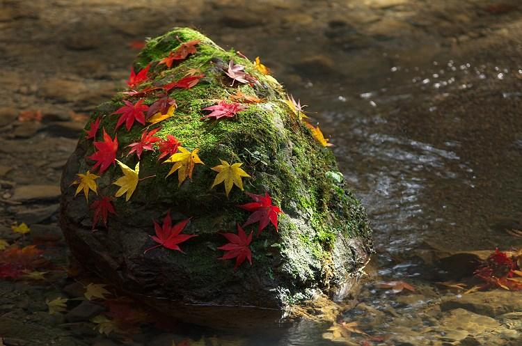 水辺の秋 ~小国神社の紅葉 20~