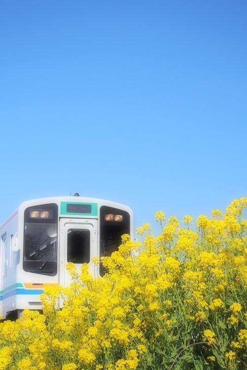 春色列車 2