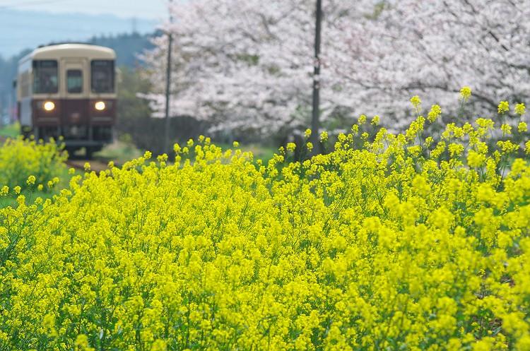 行き先は春