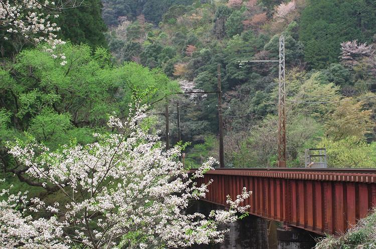 蒸気機関車と桜の風景