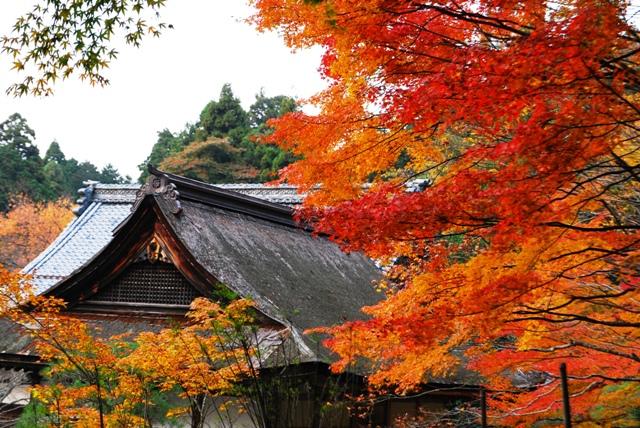 湖東三山百済寺2011紅葉
