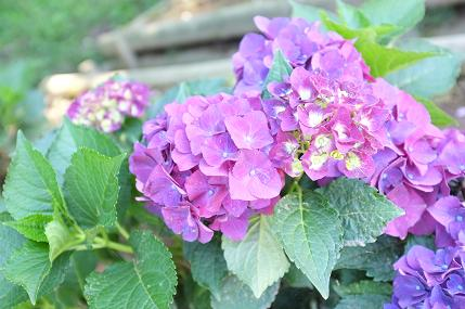 20110711_aji1