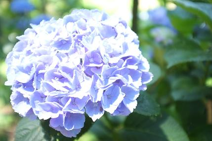 20110711_aji10