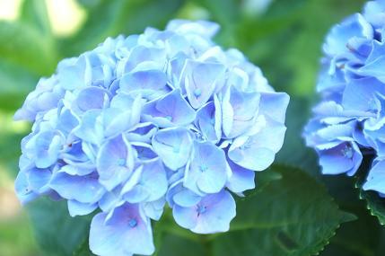 20110711_aji5