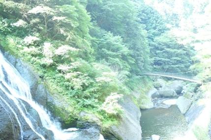 20110720_fuku7