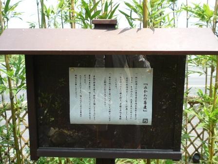 20110417_mikawa2