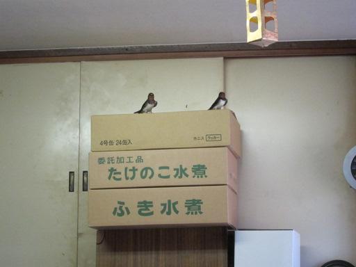 おかめ食堂(ツバメ)