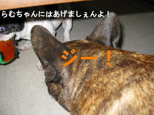 s-IMG_0333.jpg