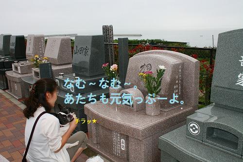s-IMG_1798.jpg