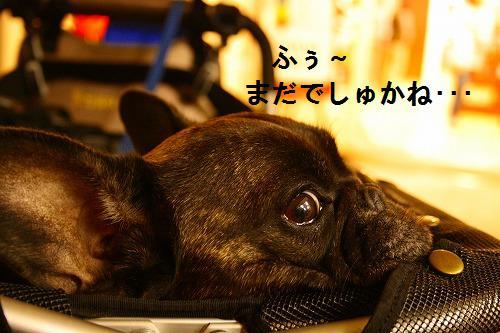 s-IMG_2600.jpg