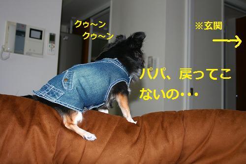 s-IMG_3525-1.jpg