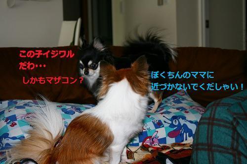 s-IMG_3553.jpg
