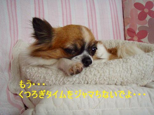 s-P6100013.jpg
