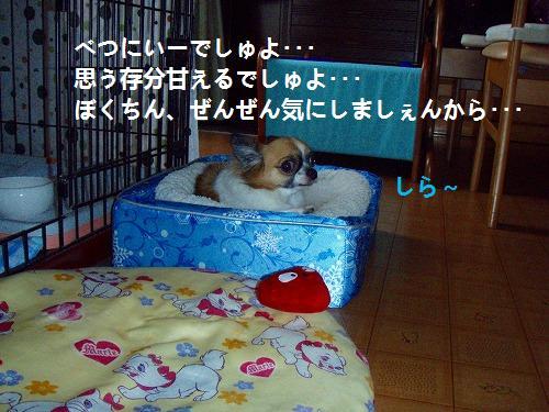 s-P9030023.jpg