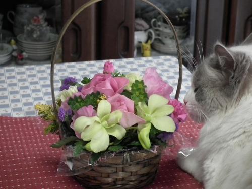誕生花とケーキ+002_convert_20120304111849