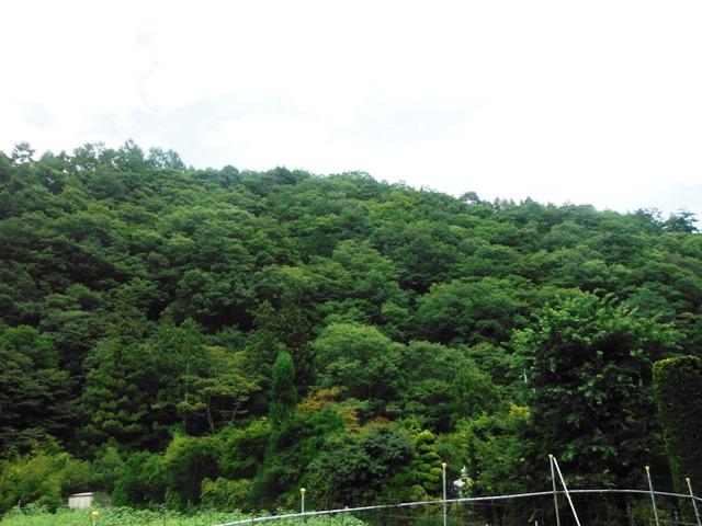 霊泉寺城山砦 (5)