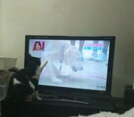 こまちゃんとテレビ