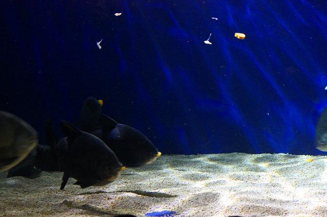 山の水族館 (11)