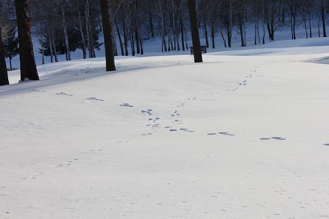 歩くスキー 028