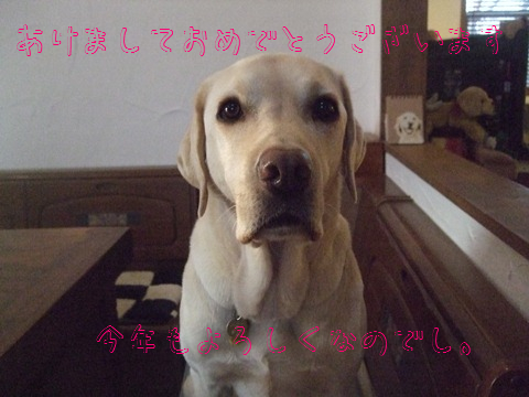 022_20130101111100.jpg