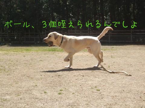 2010_04085gatu0004.jpg
