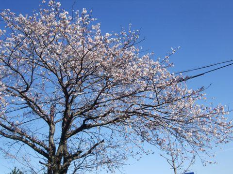 2010_04085gatu0039.jpg