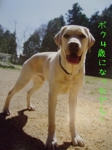 2010_04085gatu0048.jpg