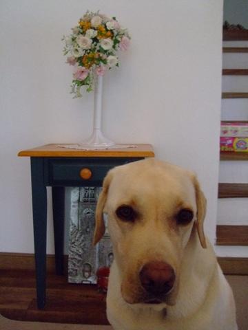 2010_05175gatu0010.jpg